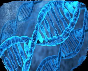Днк человека, древнии Славяни знали о ДНК