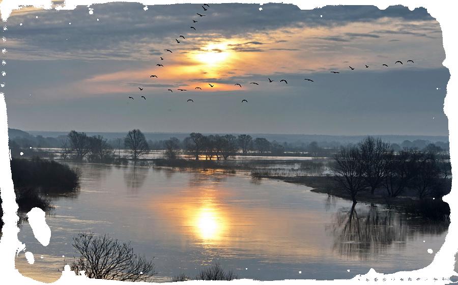 Вырием древние славяне называли Рай и его врата. Птицы летят Вырей чтобы переждать зиму по повериям наших предков.